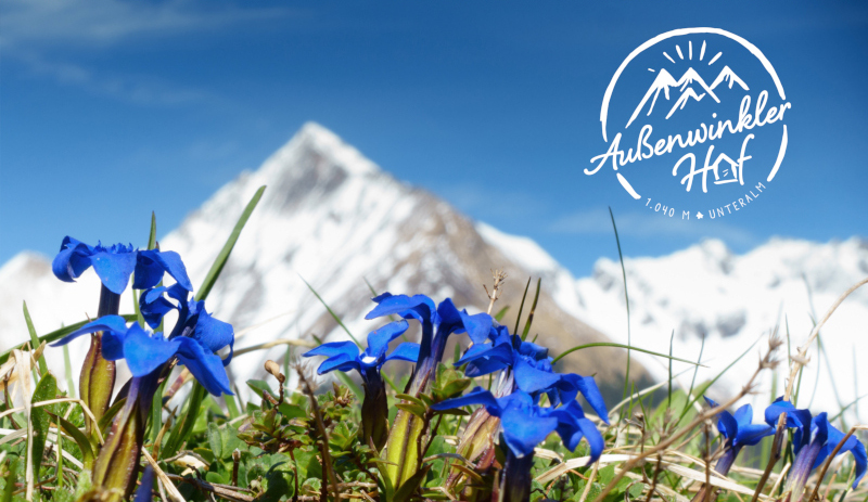 Berg-Logo-Außenwinkler-Hof